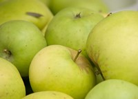 Canada, British Columbia, Cowichan Valley Close-Up Of Green Apples Fine Art Print