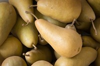 Canada, British Columbia, Cowichan Valley Close-Up Of Harvested Pears Fine Art Print