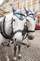 Czech Republic Horses On Cobblestone Karlovy Vary Street Fine Art Print