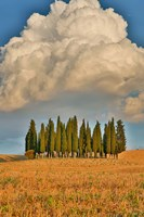 Italy, Tuscany Cypress Tree Grove And Towering Cloud Formation Fine Art Print