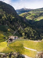 Viniculture Near Klausen In South Tyrol During Autumn, Italy Fine Art Print