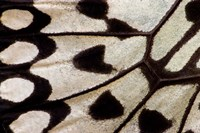 Wing Pattern Of Tropical Butterfly 1 Fine Art Print