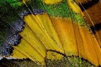 Wing Pattern Of Tropical Butterfly 2 Fine Art Print