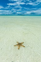 Sea Star In The Sand On The Rock Islands, Palau Fine Art Print