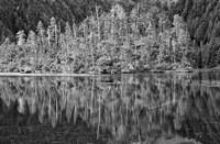 Alaska, Inside Passage, Reflecting Trees Fine Art Print