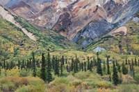 Alaska, Fall Foliage, Sheep Mountain Fine Art Print