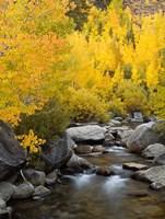 California, Eastern Sierra Bishop Creek During Autumn Fine Art Print