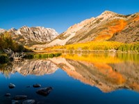 California, Eastern Sierra, Fall Color Reflected In North Lake Fine Art Print