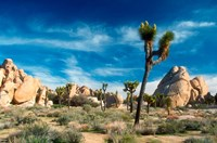 Joshua Trees With Granite Rocks Fine Art Print