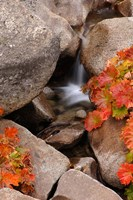 Small Waterfall In The Sierra Nevada Mountains Fine Art Print