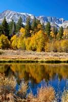 Yosemite's Mount Dana Fine Art Print