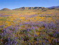 Wildflowers Bloom Beneath The Caliente Range, California Fine Art Print