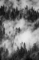 Swirling Forest Mist, Yosemite NP (BW) Fine Art Print