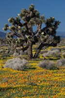 Mojave Desert Joshua Tree Fine Art Print