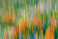 Wildflower Abstraction, Angeles National Forest Fine Art Print