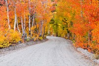 Autumn In The Inyo National Forest Fine Art Print