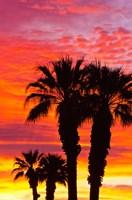 Silhouetted Palms At Sunrise Fine Art Print