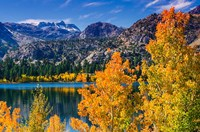 Golden Fall Landscape At June Lake Fine Art Print