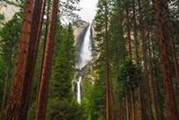 Yosemite Falls Through A Forest Fine Art Print