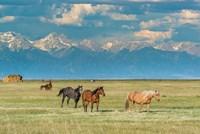 Heard Of Horses In Hayfield, San Luis Valley Fine Art Print