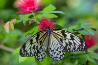 Rice Paper Butterfly Fine Art Print