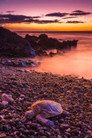 Hawaiian Green Sea Turtle On A Lava Beach At Sunset, Hawaii Fine Art Print