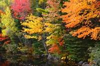 Autumn Trees Along The Sheepscot River, Maine Fine Art Print