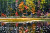 Somes Pond In Autumn, Somesville, Maine Fine Art Print