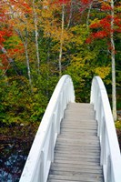 White Footbridge Path, Maine Fine Art Print