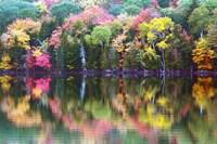 Great Long Pond Reflection,  Maine Fine Art Print