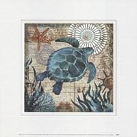 Monterey Bay Turtle Fine Art Print