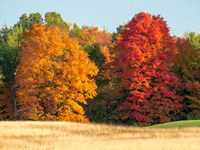 Autumn In The Upper Peninsula Of The Hiawatha National Forest Fine Art Print