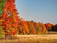 Fall Colors Of The Hiawatha National Forest Fine Art Print