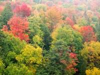 Forest Above The Cut River Bridge, Michigan Fine Art Print