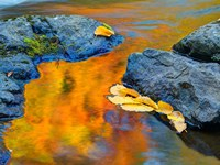 Michigan, Upper Peninsula Fall Colors Reflecting In River With Leaves Floating Fine Art Print