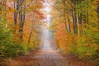Autumn Road In Schoolcraft County, Michigan Fine Art Print