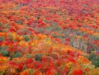 Superior National Forest In Autumn Fine Art Print