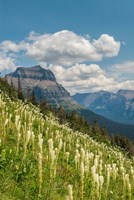 Beargrass As Seen From Glacier National Park Fine Art Print
