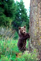 Grizzly Bear Cub Leaning Against A Tree Fine Art Print