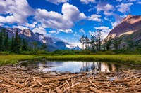 Driftwood And Pond, Saint Mary Lake, Glacier National Park, Montana Fine Art Print