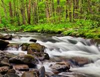 Water Flows At Straight Fork, North Carolina Fine Art Print