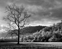 Storm Clearing At Dawn In Cataloochee Valley, North Carolina (BW) Fine Art Print