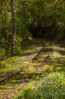 Overgrown Abandoned Rail Line, North Carolina Fine Art Print