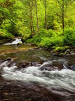 Siuslaw National Forest, Sweet Creek, Oregon Fine Art Print