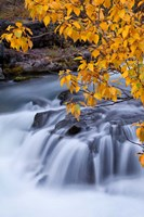 Rogue River Waterfalls In Autumn, Oregon Fine Art Print