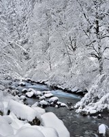 Snow On Boulder Creek, Oregon Fine Art Print