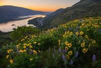 Wildflowers At Rowena Plateau,  Oregon Fine Art Print