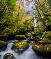 Mccord Creek In Autumn, Oregon Fine Art Print