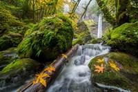 Autumn At Elowah Falls, Oregon Fine Art Print