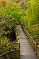 Bridge At Crystal Springs Rhododendron Garden, Portland, Oregon Fine Art Print